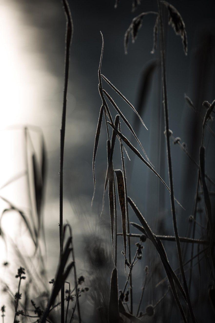nature-3-web2